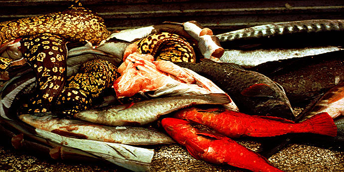 Fischreichtum Azoren