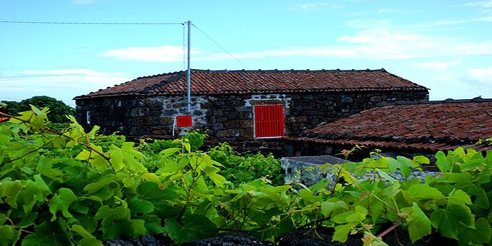 Unesco Weingaerten